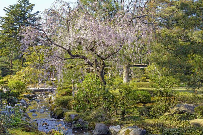 Kenroku-en (Six Attributes Garden) in Kanazawa Ishikawa, Japan