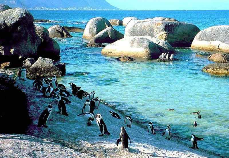 Boulders Beach, Western Cape, South Africa