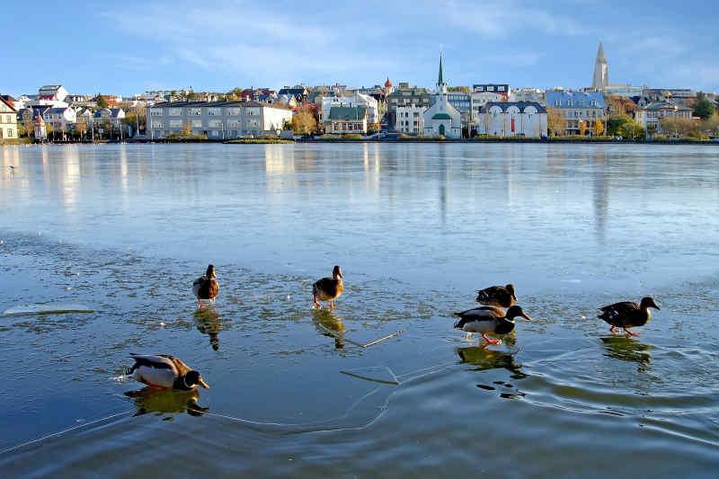 Lake Tjorin • Reykjavik