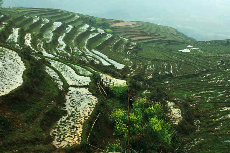 Rice fields of Sapa