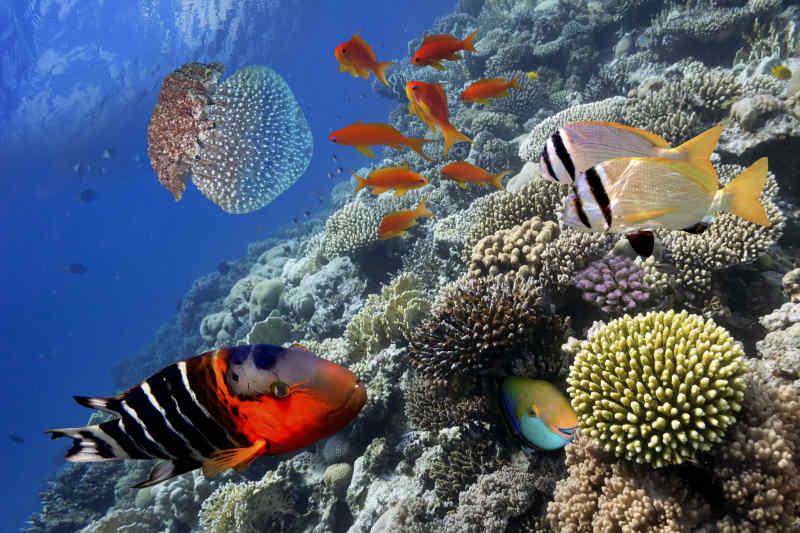 Barrier Reef Life