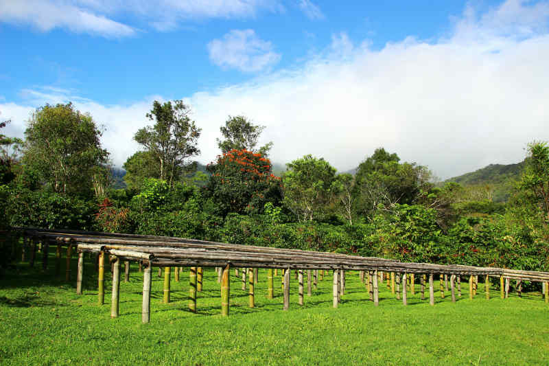 Boquete coffee farm