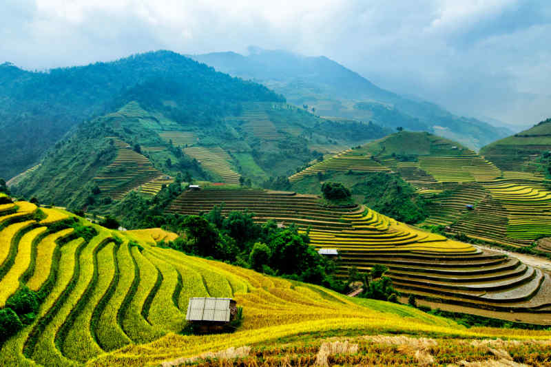 Vietnam • Mu Cang Chai Rice Fields Terrace