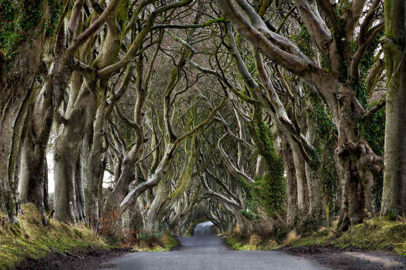King Road Filming Locations: Dark Hedges Ireland
