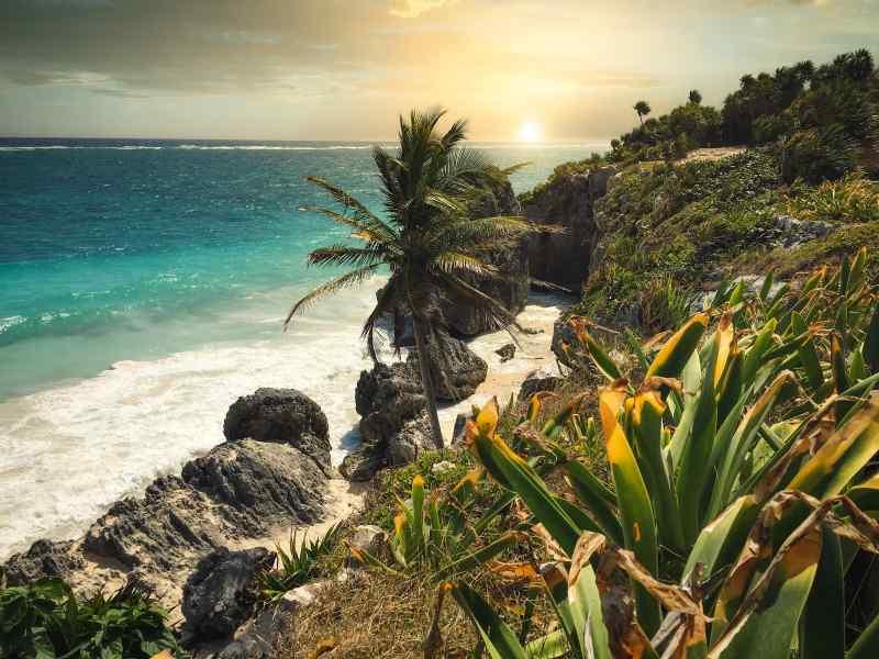 Palm trees against a beach in Mexico.