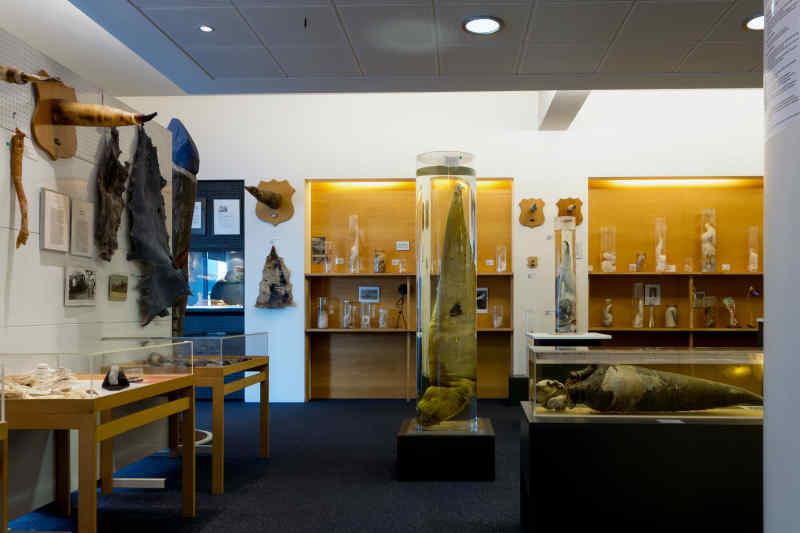 Iceland Phallological Museum • Reykjavík, Iceland