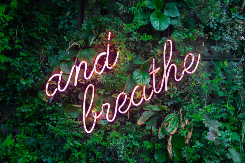 The words ''and breathe'' in neon lights against a wall of plants.