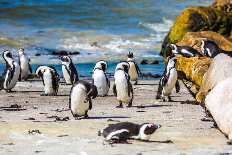 Boulders Beach in Simon's Town, South Africa