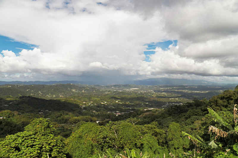 Orcovis