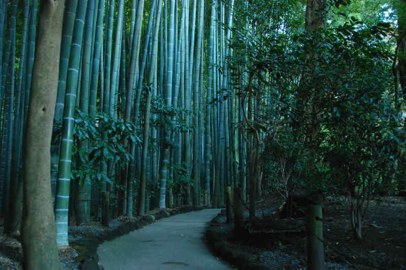 Hōkoku-ji Bamboo Garden in Kamakura, Japan