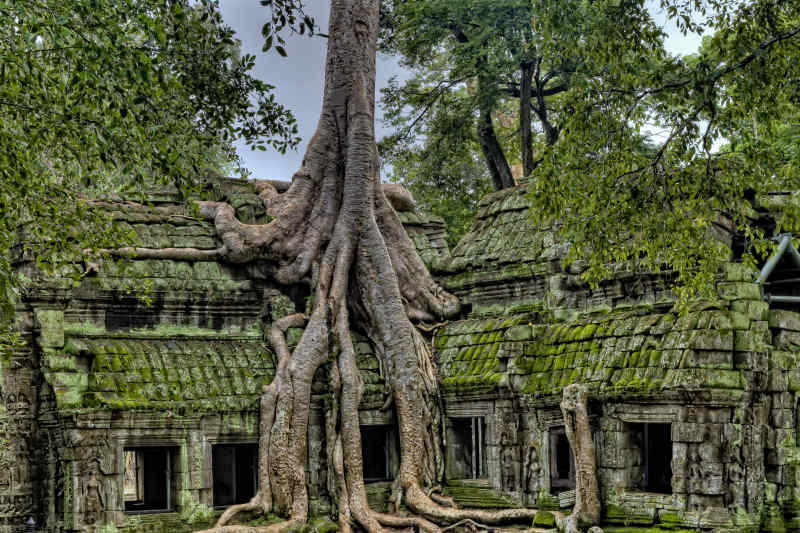 Tree growing out of an ancient temple, Cambodia.