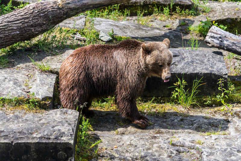 Bear Park