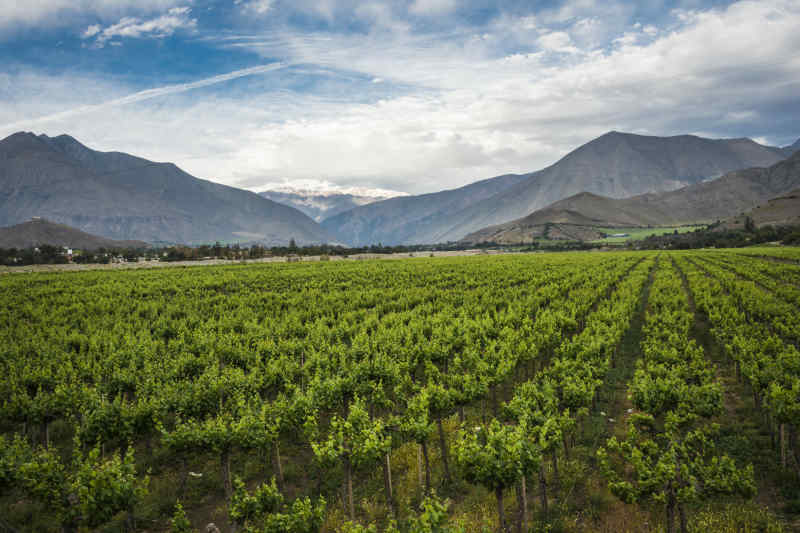Chile vineyard