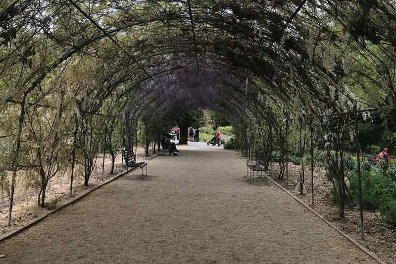 Adelaide Botanic Garden • Adelaide, Australia