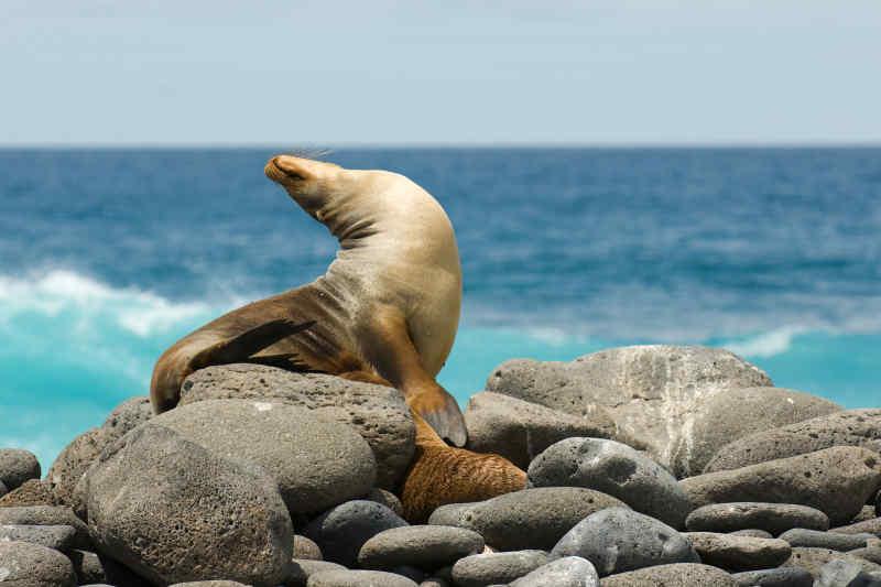 Galapagos Island • Ecuador