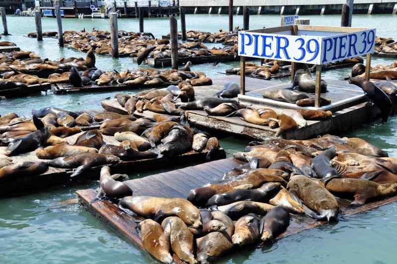 Seals! California