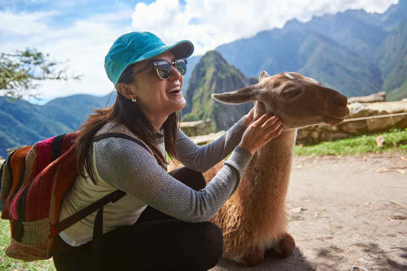 Meet a friendly llama