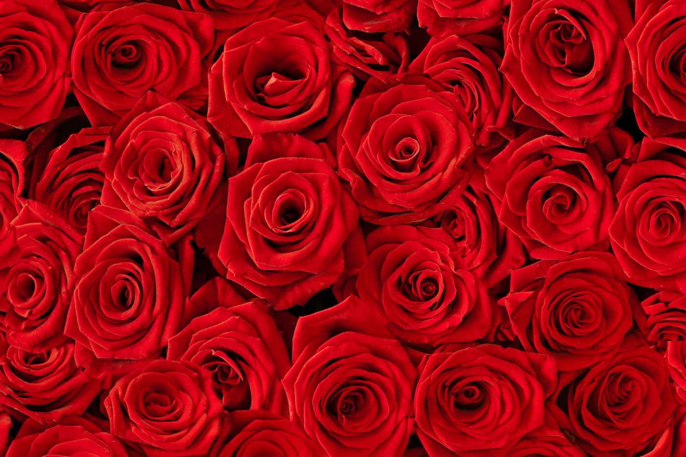 Rose matchmaking Dallas