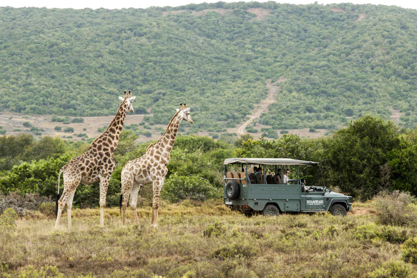 Safari in South Africa