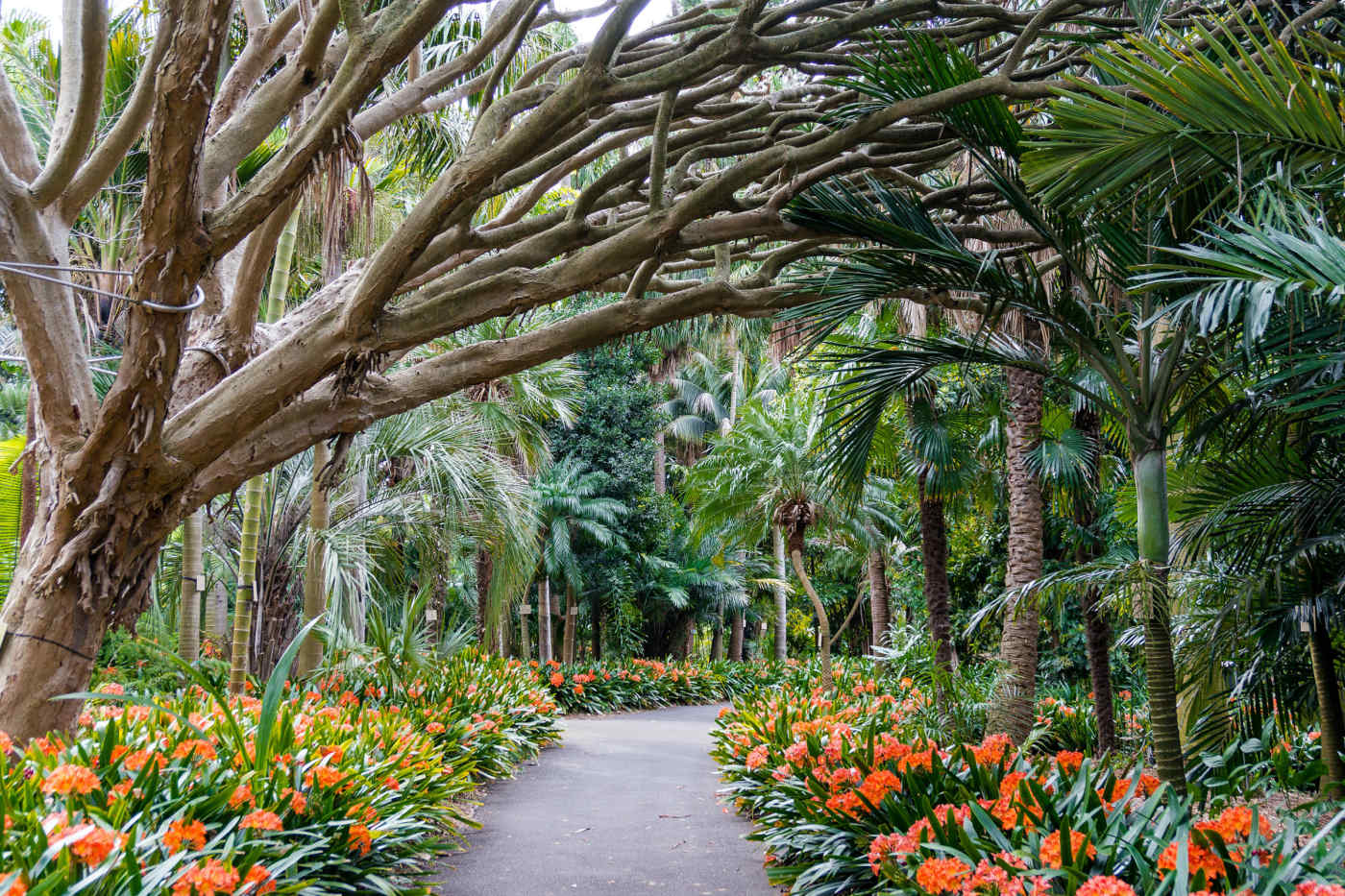 Royal Botanic Gardens • Sydney, Australia