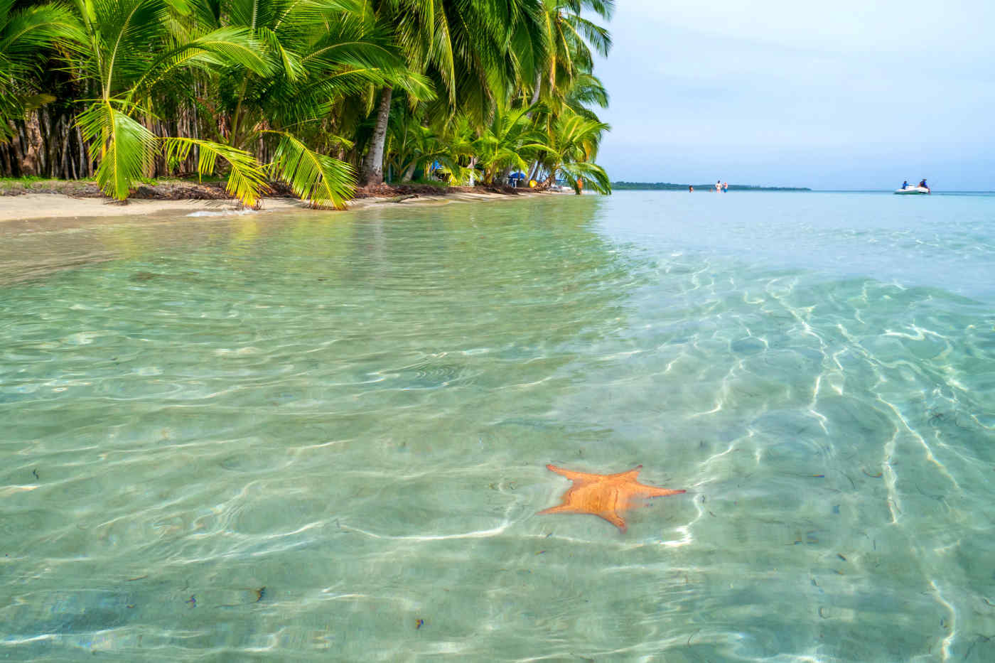 Starfish Beach in Bocas del Toro, Panama