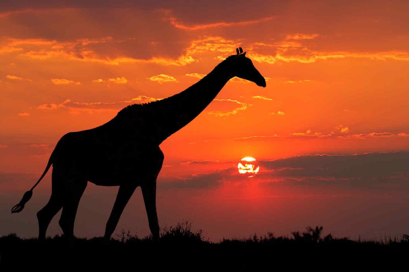 Safari, South Africa