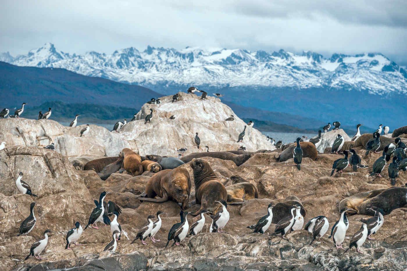 Beagle Channel • Ushuaia, Argentina