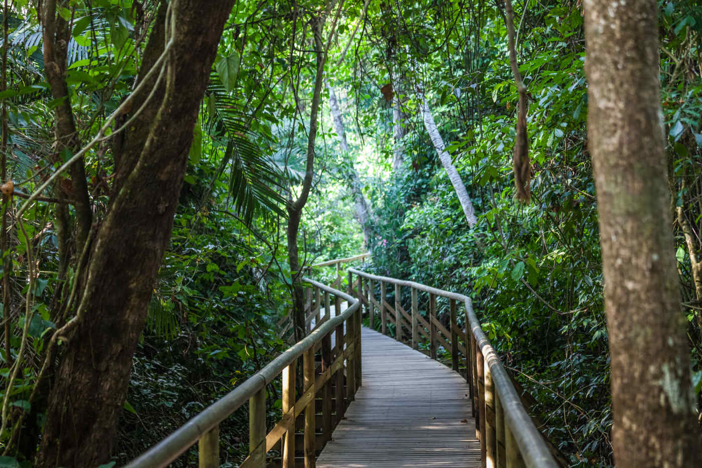 Rainforest Walkway • Gamboa
