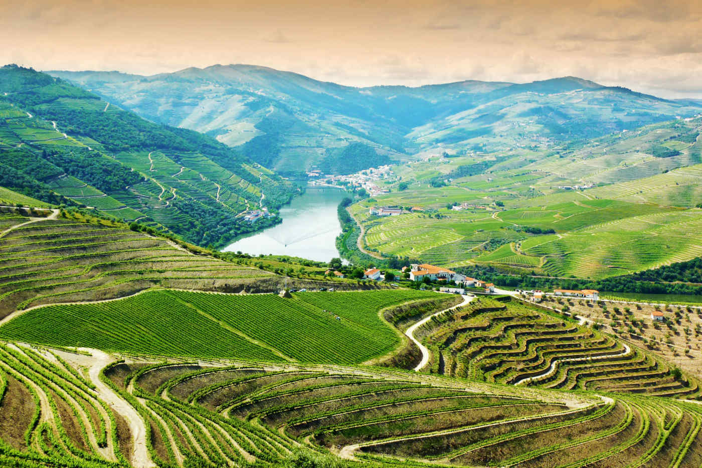 Douro Valley Vineyards • Portugal