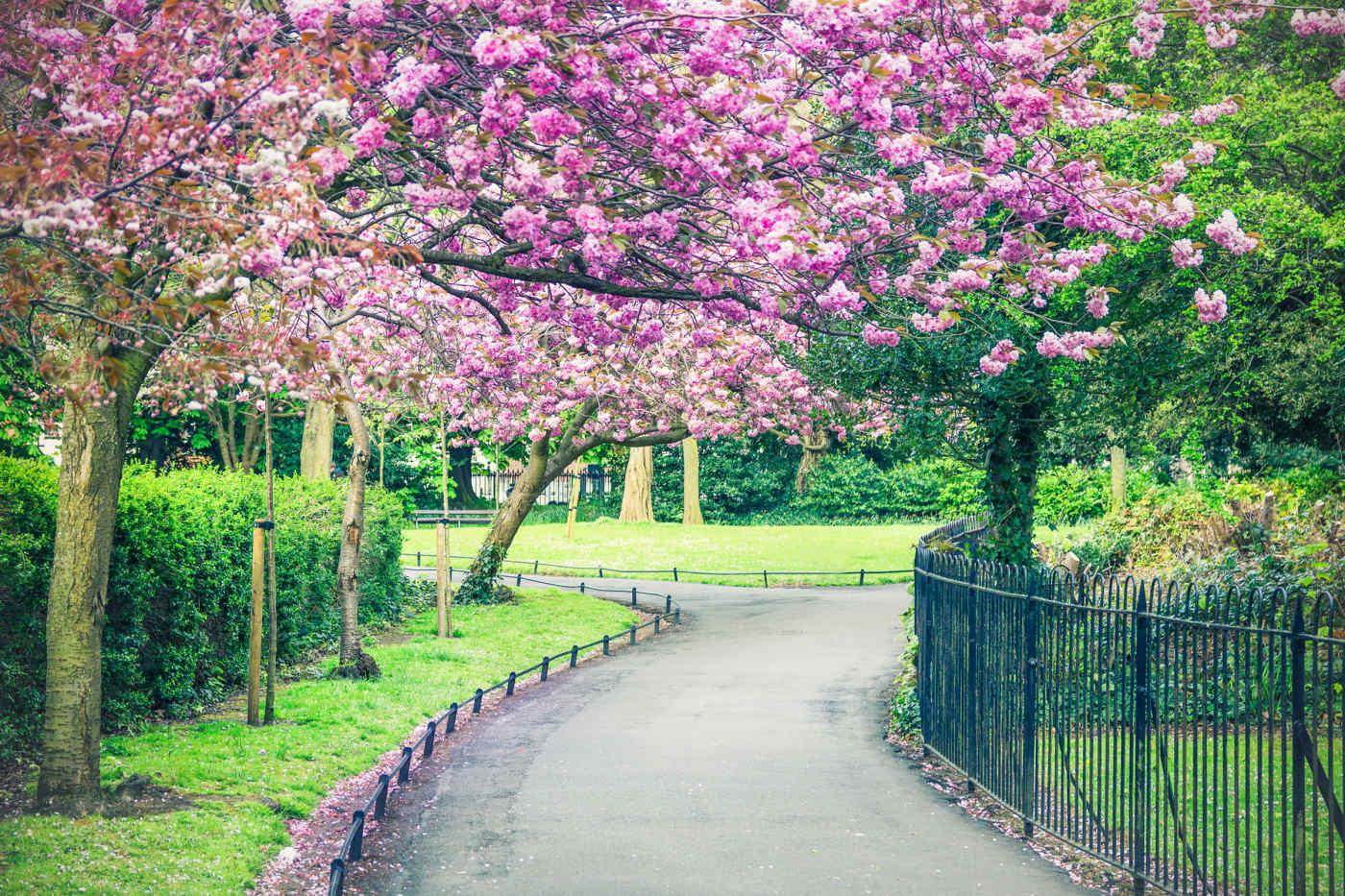St Stephen's Green • Dublin, Ireland