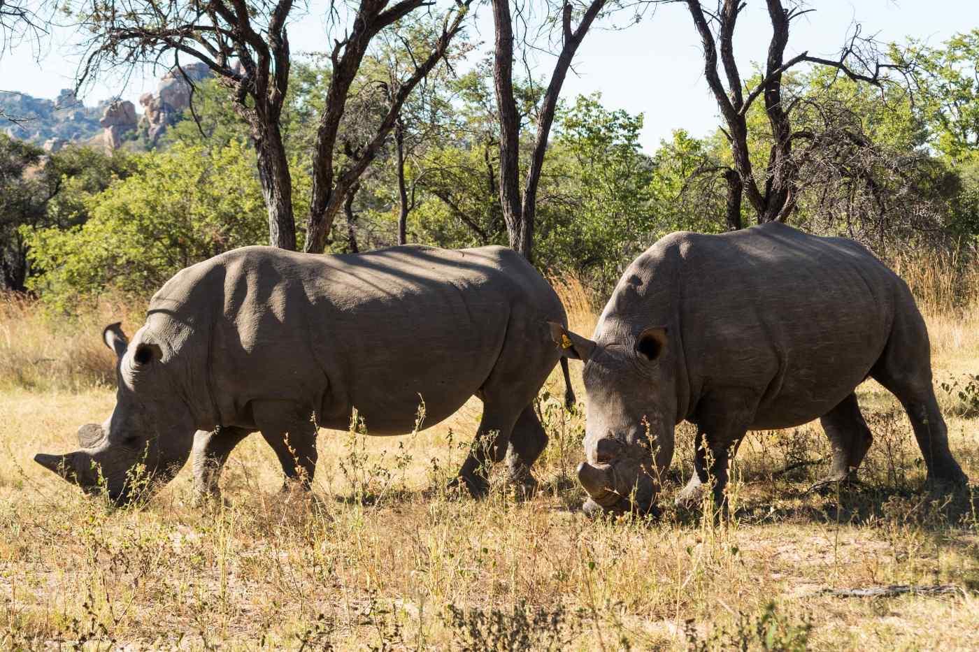 Matobo National Park, South Africa