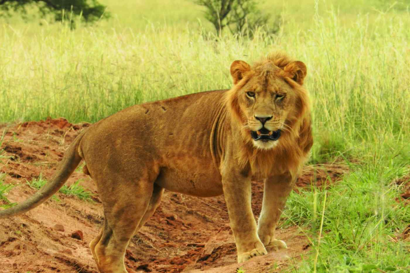 Queen Elizabeth National Park, Uganda