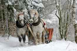 Horse Sled