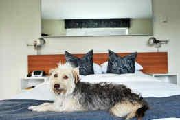 The Jupiter Hotel - Pet Friendly