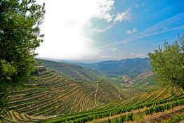 Douro Valley Vineyards, Portugal