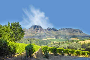 Western Cape Winelands in South Africa
