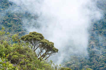Cloudforest Andes
