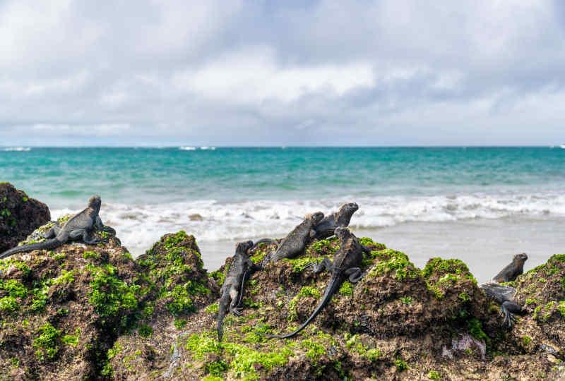 Puerto Villamil, Isabela Island, Ecuador
