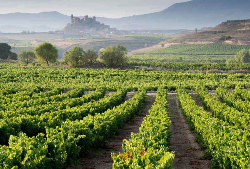 Vineyard • La Rioja, Spain