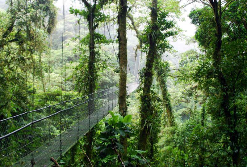 Hanging Bridge Monteverde