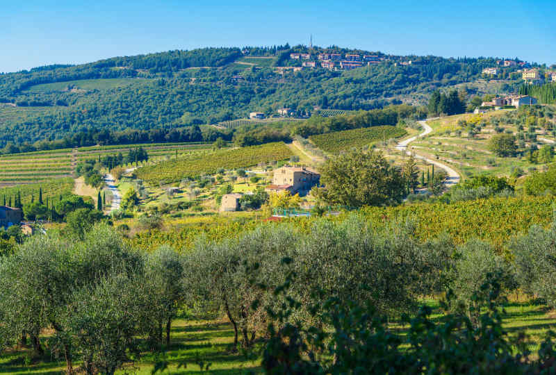 Vineyard in Chianti region • Tuscany