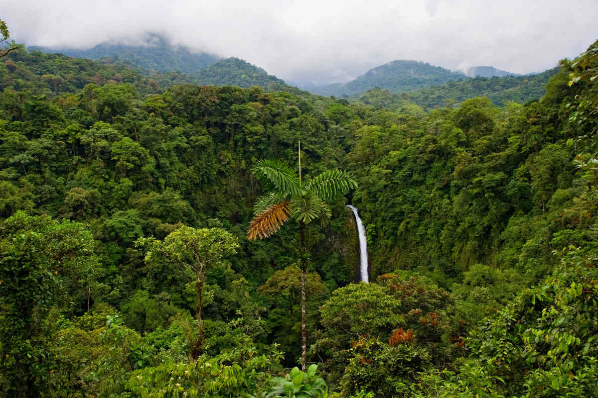 Costa Rica Vacation Packages Costa Rica Rainforest