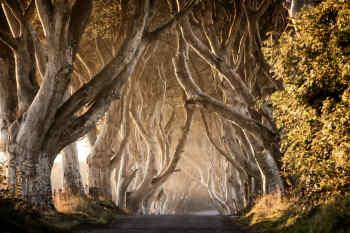 Kingsroad • Dark Hedges, Antrim