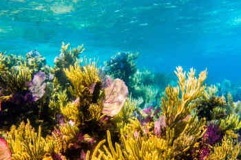 Belize • Reef