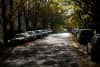 Cars parked along a street dappled by sunlight from fall-bare trees