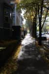 A sidewalk dappled with light filtered through fall-bare trees, and lines with fallen leaves