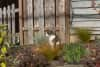 A cat sitting in a garden, looking perpendicular to the camera