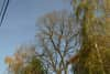 Trees that still have yellowing leaves against a blue sky