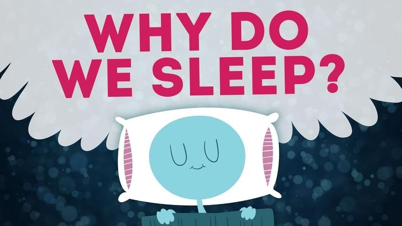 Hiểu về não kỳ 3 - Tại sao bạn ngủ?