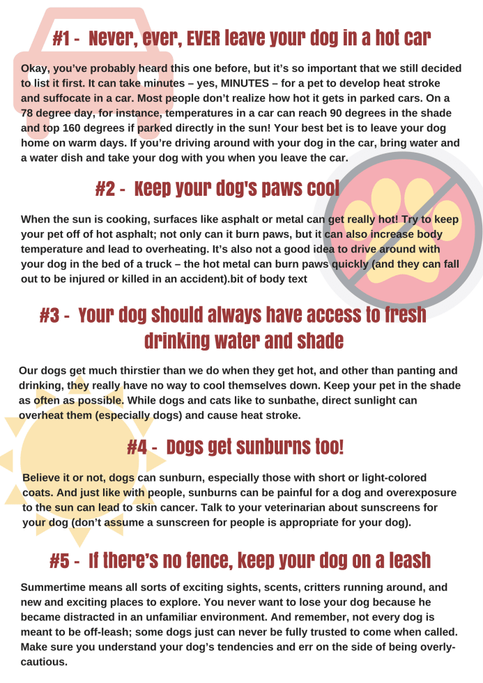 summer dog safety tips infographic